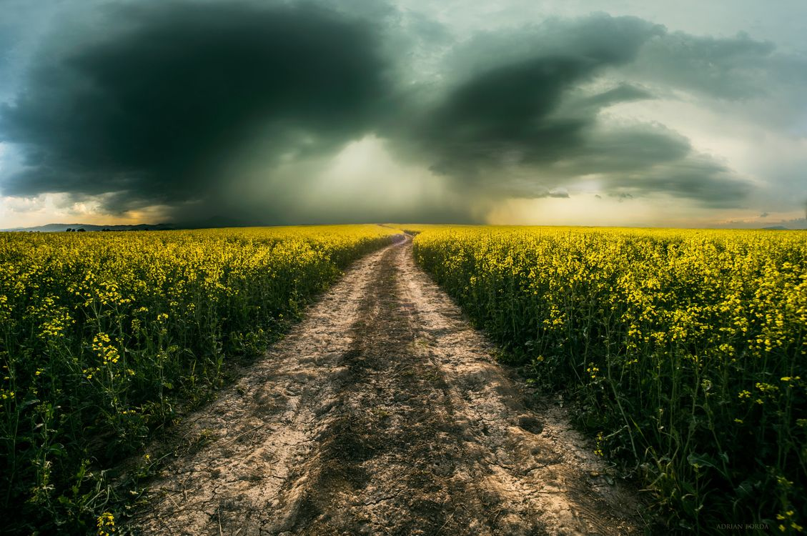 Обои поле, облака, облако картинки на телефон