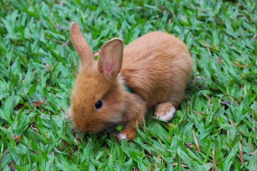 Photo free rabbit, grass, walks