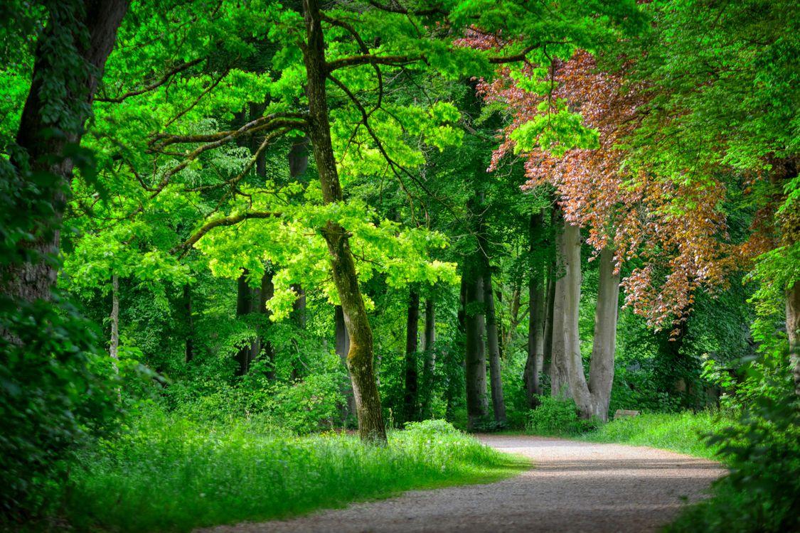Посмотреть фото природа, лес