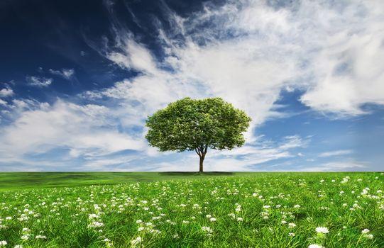 Фото бесплатно цветы, одинокое дерево, пейзаж