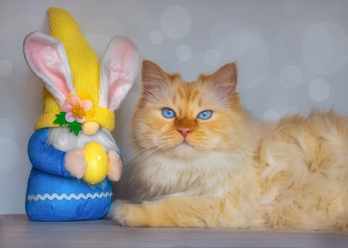 Photo free animal, easter, cat
