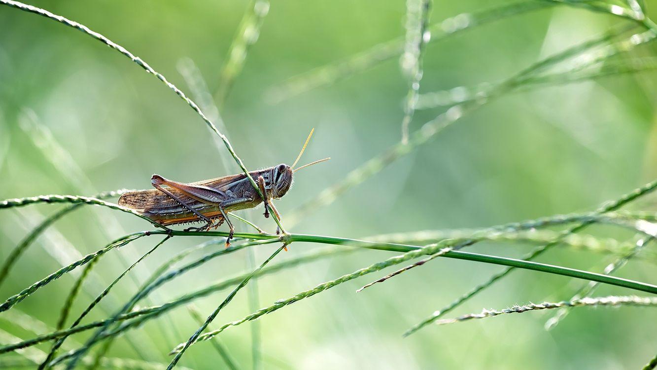 Фото насекомые трава кузнечик - бесплатные картинки на Fonwall