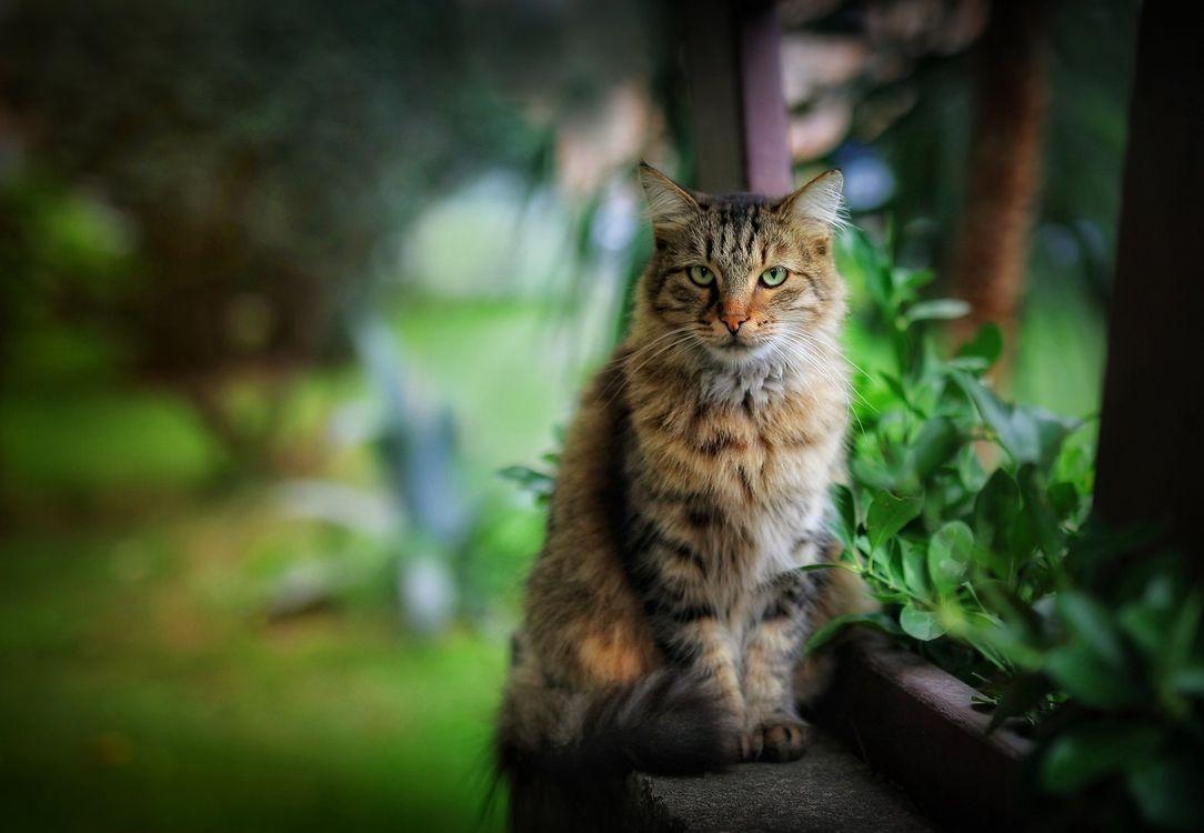 Фото бесплатно кот, кошка, животное - на рабочий стол