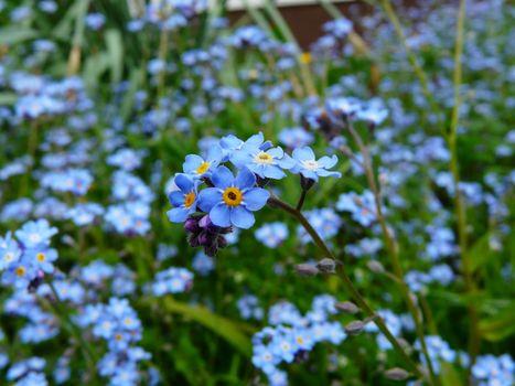 Фото бесплатно дикий цветок, макросъёмка, близко
