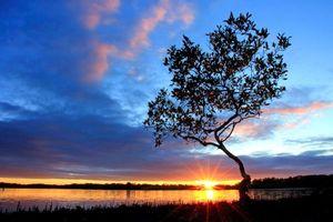 Заставки озеро, дерево, закат