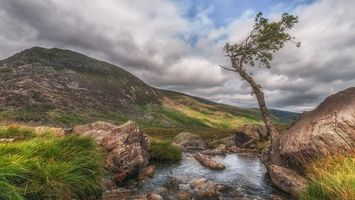 Фото бесплатно река, горы, дерево