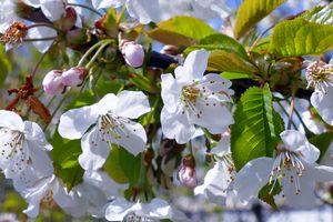Фото бесплатно флора, дерево, ветка