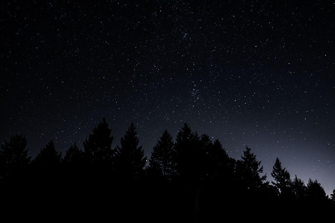 Фото бесплатно светимость, деревья, звездное небо - на рабочий стол