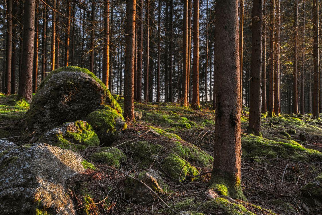 Фото природа лес стволовое дерево - бесплатные картинки на Fonwall