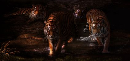 Заставки сумерки, река, тигры