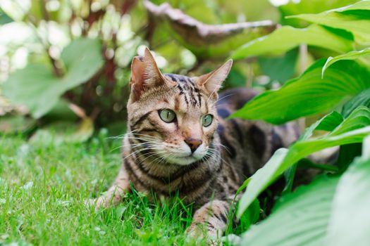 Фото бесплатно животные, кошка, листва