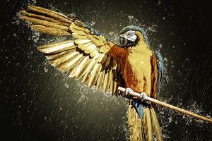 Фото бесплатно Ара, попугай, крыло