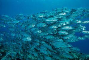 Бесплатные фото Дайвинг,Природа,Национальный парк,Индонезия,стая рыб,подводный мир,море