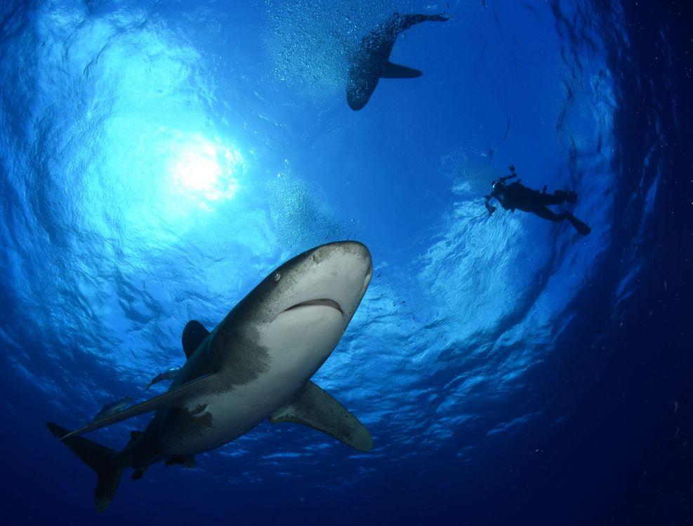 Обои Морские обитатели, Акулы, Акула, море, Подводный мир на телефон   картинки подводный мир