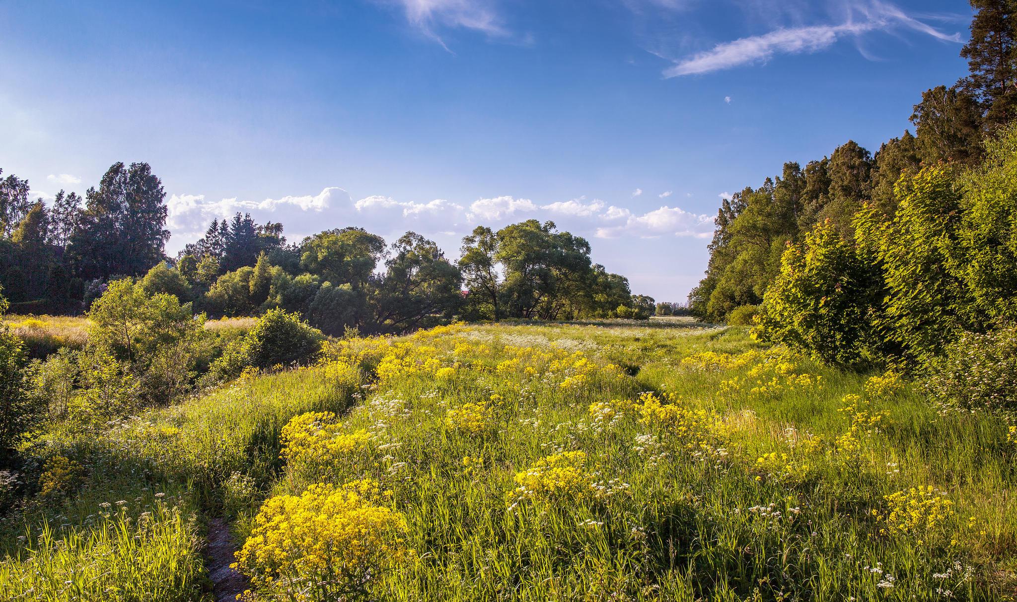Обои Pavlovsky park, поле, цветы, деревья