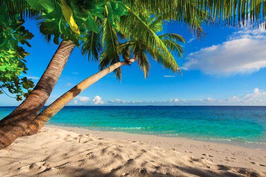 Красивые обои тропики, пляж