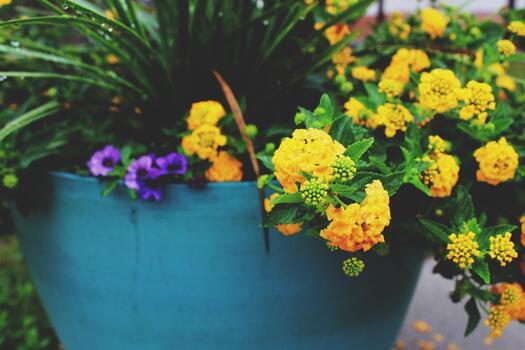 Photo free yellow flowers, pot, flowers