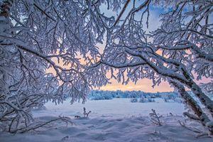Фото бесплатно снег, лапландия, пейзаж