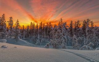 Заставки лес, Finland, деревья