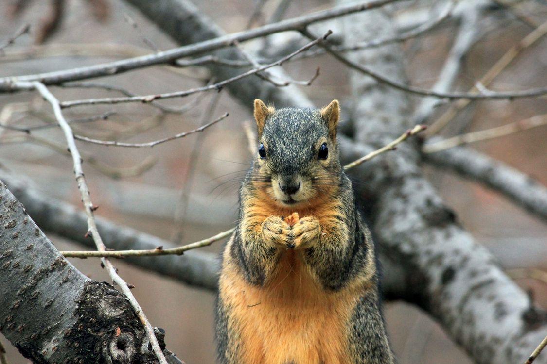 Фото фауны животные бесплатные изображения - бесплатные картинки на Fonwall