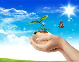 Фото бесплатно руки, яйцо, бабочка