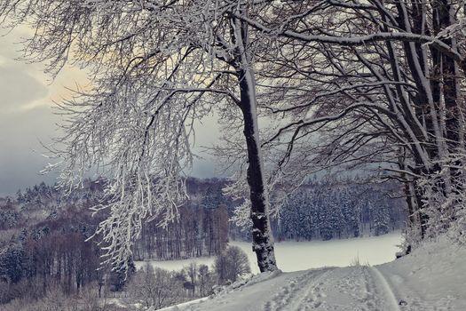 Фото бесплатно замерзшее озеро, лес, деревья