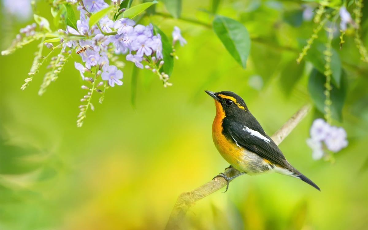 Обои птица, весна, листья картинки на телефон