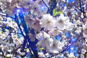 Бесплатные фото Spring Blossoms,цветы,цветок,цветочный,макрос,цветочная композиция,флора