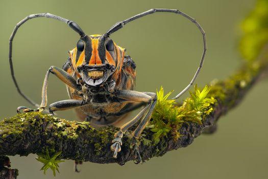 Усатый жук