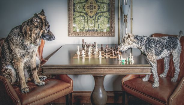 Photo free dogs, chess, game