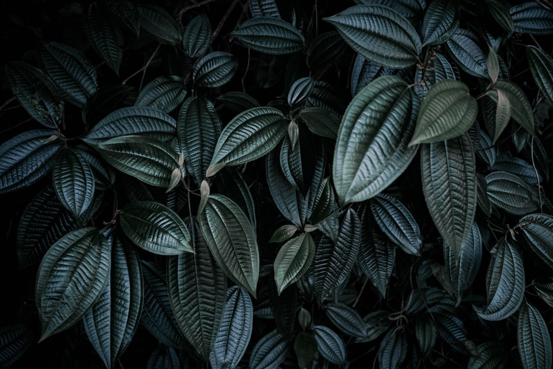Photos for free leaves, plants, branches - to the desktop