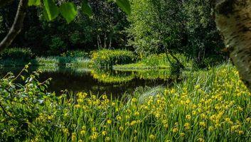Бесплатные фото озеро, лес, деревья, цветы, природа