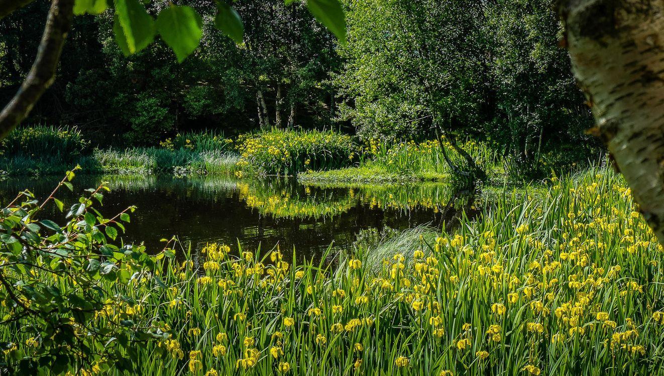 Фото бесплатно озеро, лес, деревья, цветы, природа, природа