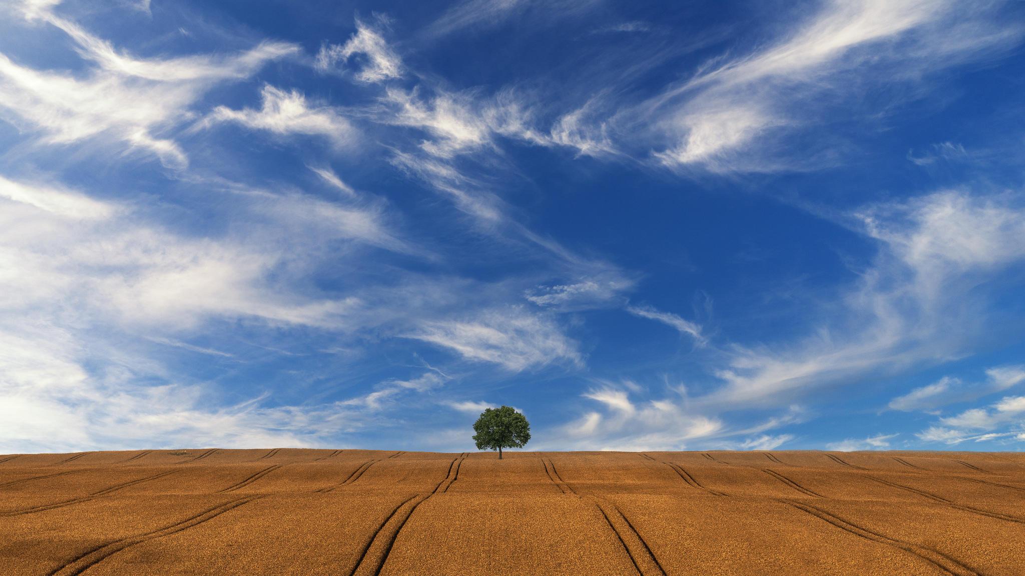Обои поле, холмы, дерево, небо