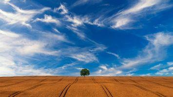 Фото бесплатно поле, холмы, дерево