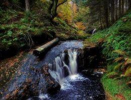 Заставки лес,деревья,водопад,скалы,водоём,природа