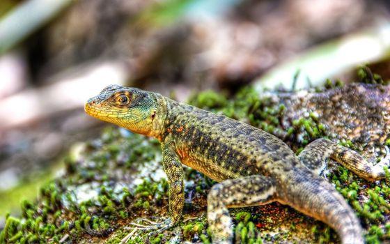Photo free lizard, animals, reptile