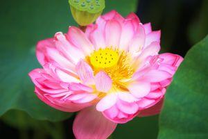 Фото бесплатно флора, красивый цветок, цветы