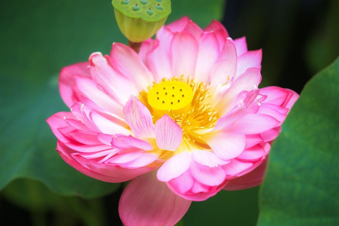 Фото бесплатно флора, красивый цветок, цветы - на рабочий стол