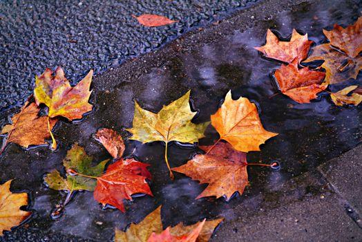Photo free autumn leaf, colorful, fall color