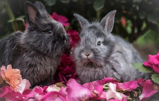 Фото бесплатно кролики, пушистые, цветы