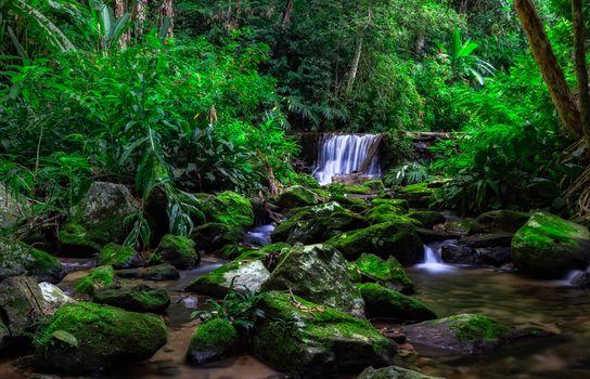Photo free river, jungle, Rio de Janeiro