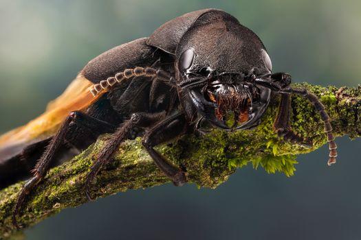 Фото бесплатно жук, насекомые, макросъемка