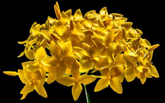 Фото бесплатно желтый, макросъёмка, дендробиум