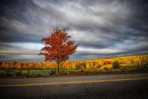 Бесплатные фото осень,закат,поле,дорога,холмы,пастбище,деревья