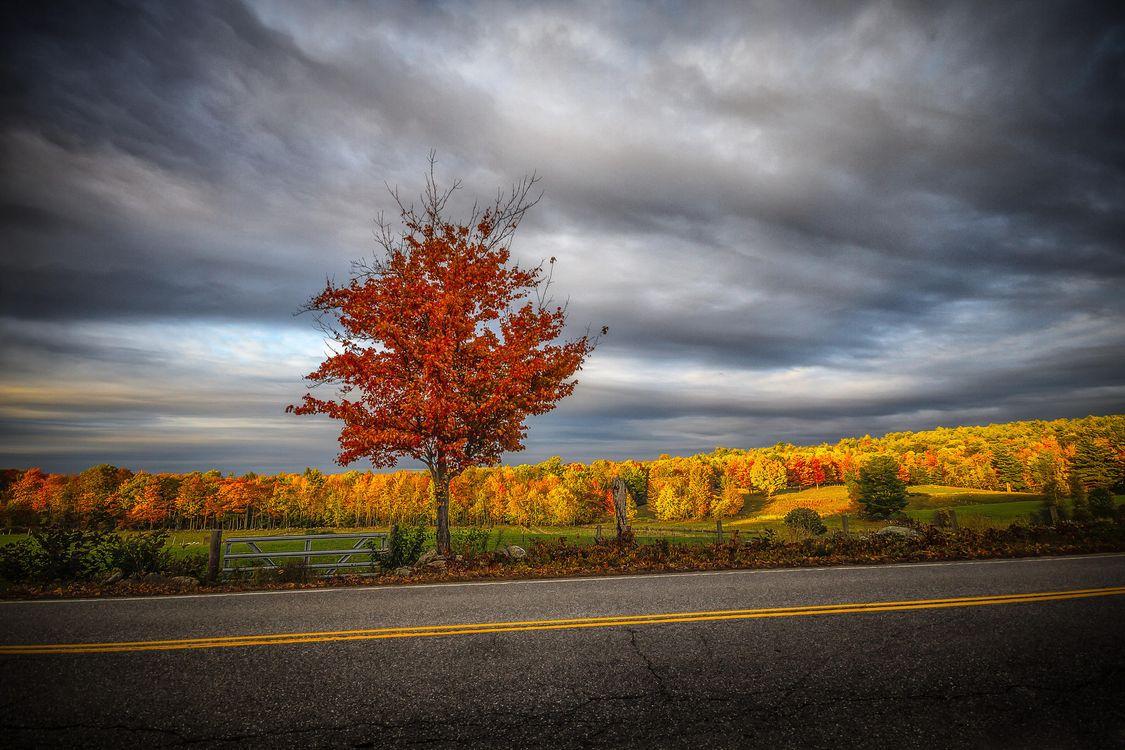 Фото бесплатно осень, закат, поле - на рабочий стол