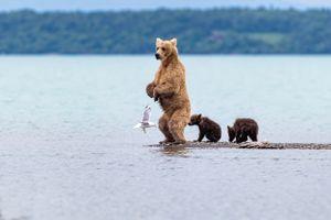 Медведь и медвежата · бесплатное фото
