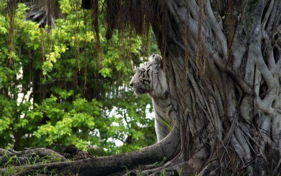 Заставки лес, животные, природа
