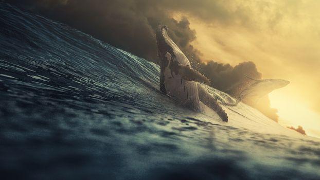 Фото бесплатно гигантский кит, океан, солнечный свет