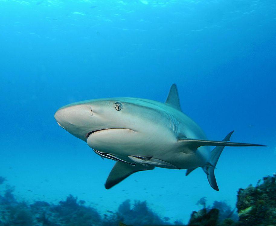 Фото бесплатно Морские обитатели, Акулы, Акула, море, подводный мир
